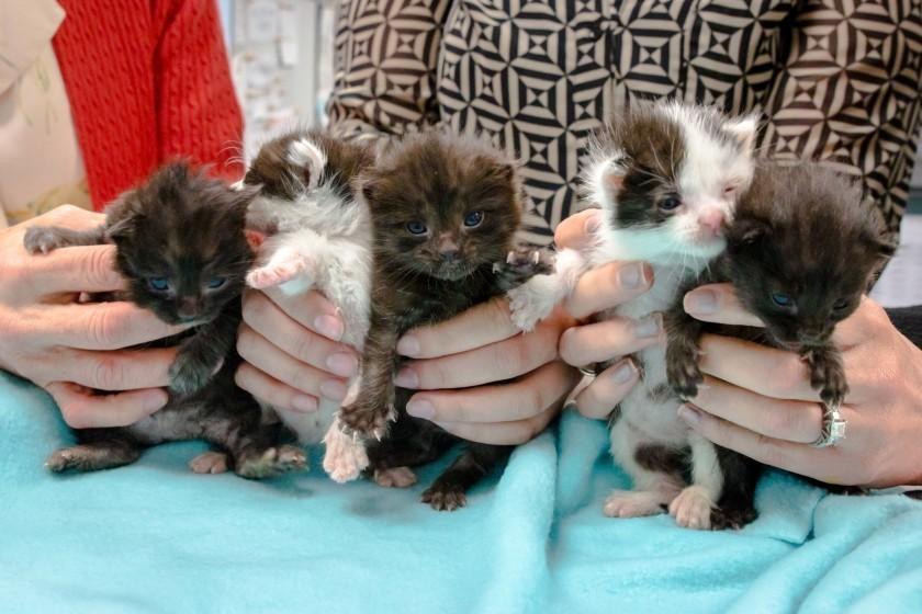 Week-old stowaway kittens survive 500-mile journey to San Diego in 60-foot steel column