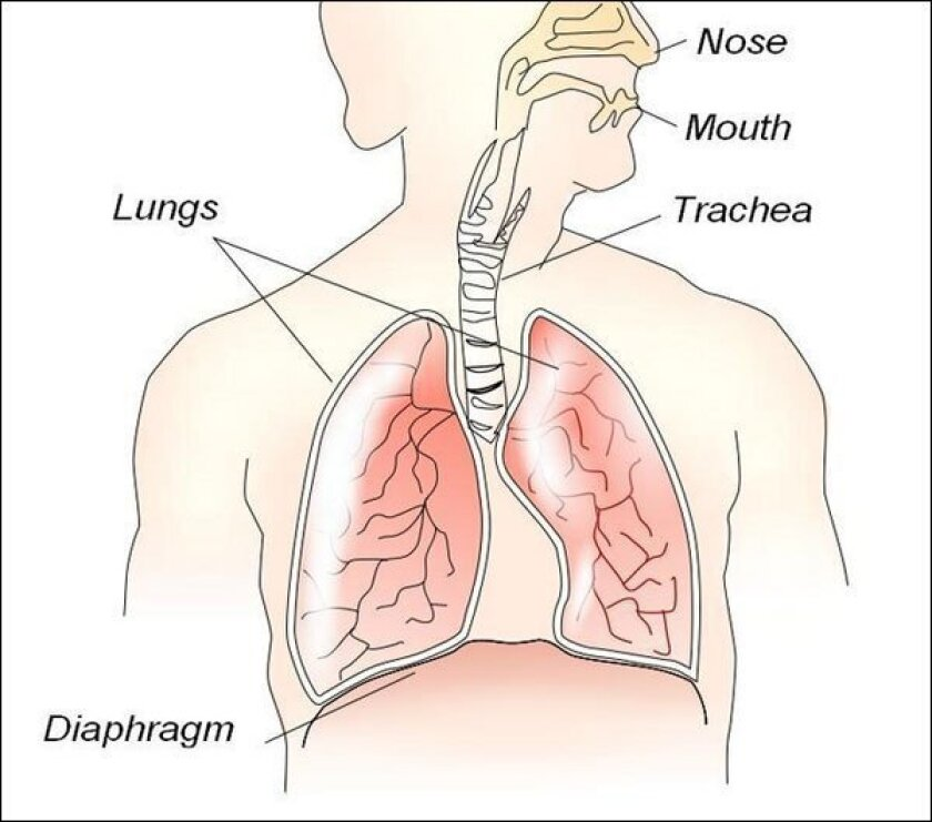 Body parts - Breathing easy with the diaphragm - The San