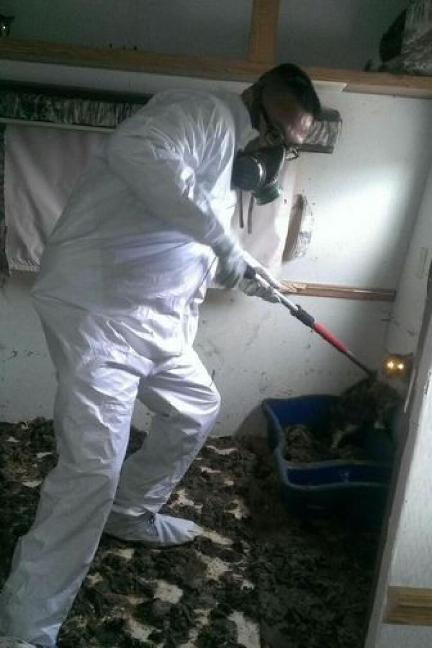 Cats and dogs rescued from filthy conditions.