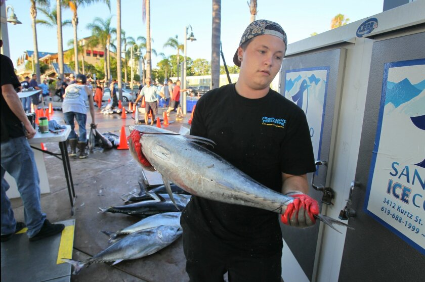 """At H&H Landing on Point Loma Sam Supranovich, of Fisherman's Processing, carries a tuna caught by a fisherman on a 5 day excursion on the """"Spirit of Adventure"""" fishing boat that just came in."""