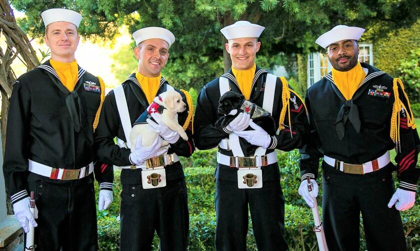 Puppies at SEAL auction enhanced(3).jpeg
