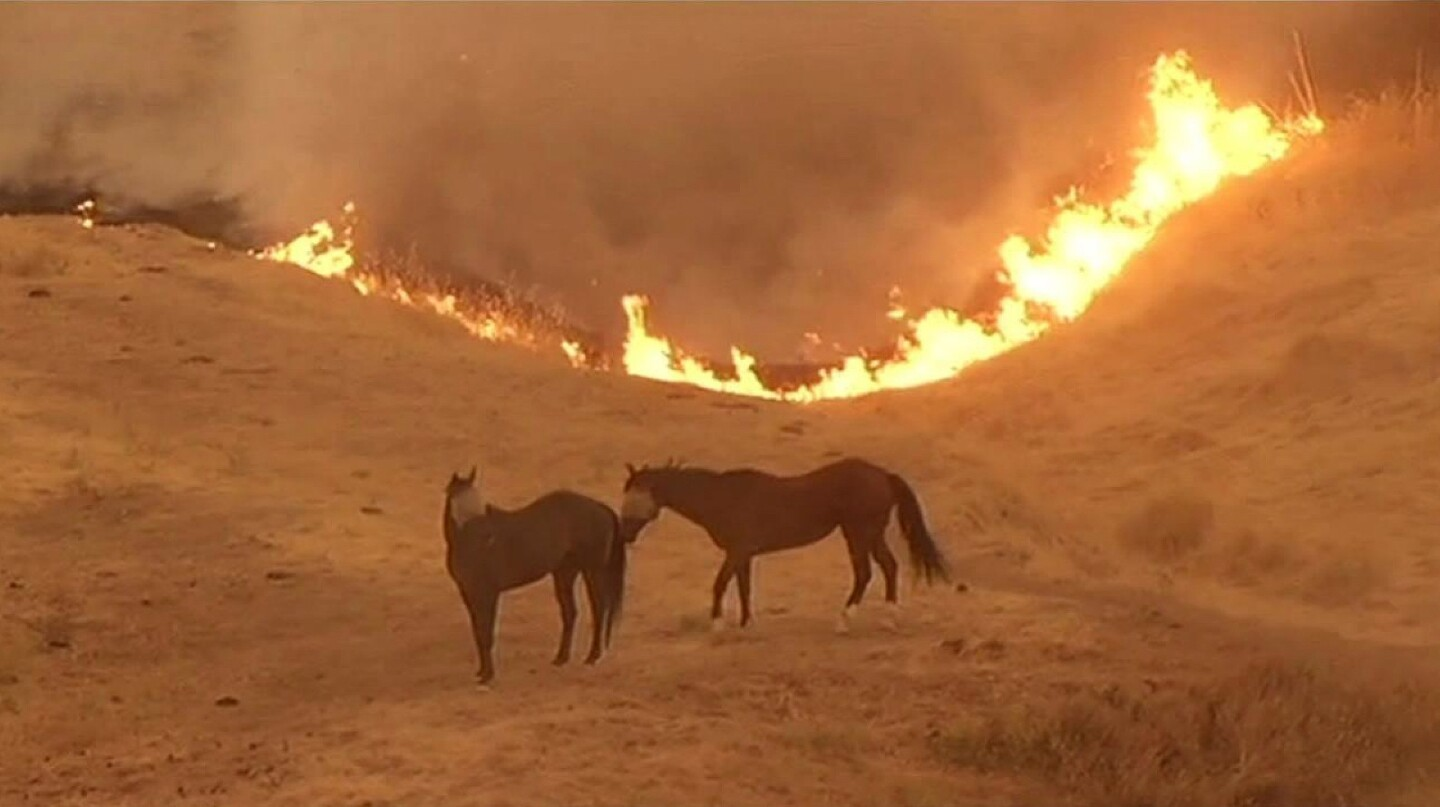 In this image from KGO-TV, flames from the Wragg fire in Northern California can be seen approaching a pair of horses.