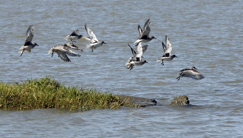 MWD votes to buy 20,000 acres of island farmland in Sacramento-San Joaquin delta