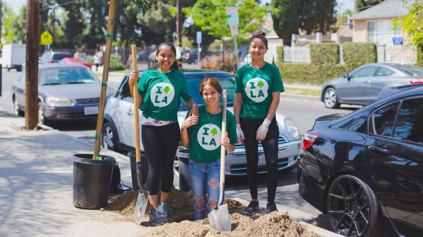 City Plants volunteers plant a street tree in North Hollywood on Arbor Day, 2018.