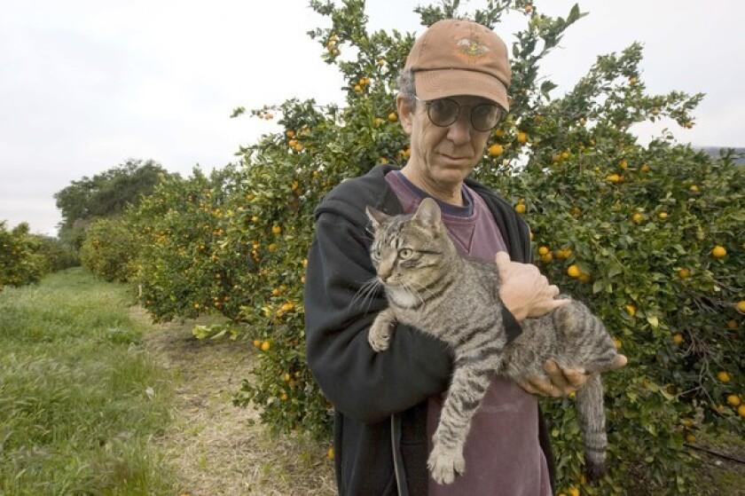 Jim Churchill holds Marty Fujita, his barn cat at Churchill Orchard in Ojai, in a Pixie mandarin grove.