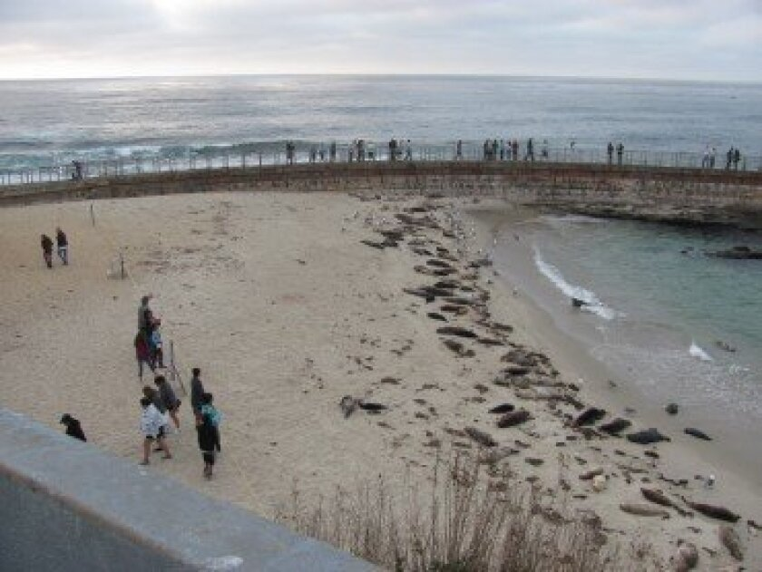 On a recent evening at the Children's Pool, a park ranger alerted visitors by loudspeaker that the beach and seawall would close each night at sunset. Susan DeMaggio