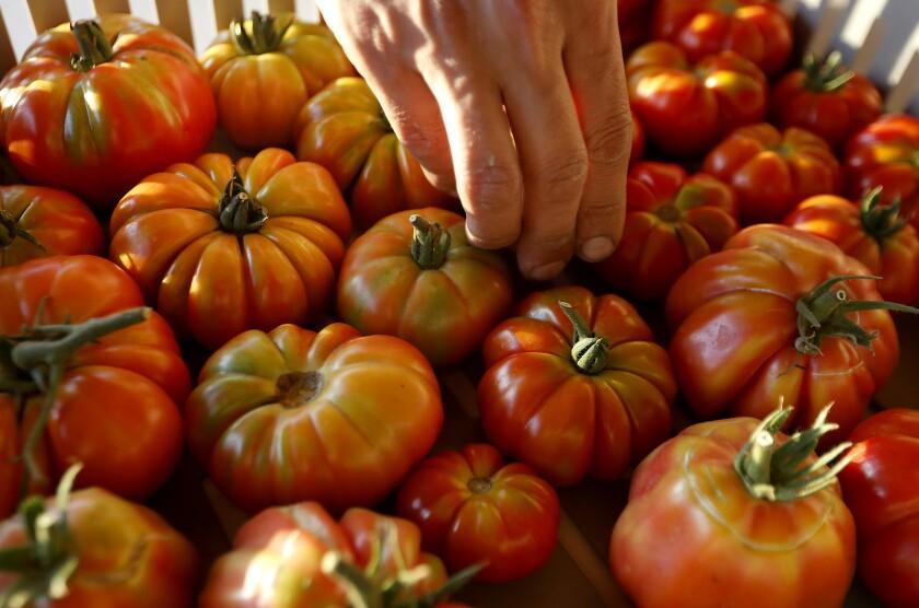 463245_la-hm-ga-farming-near-dtla007_LS.jpg