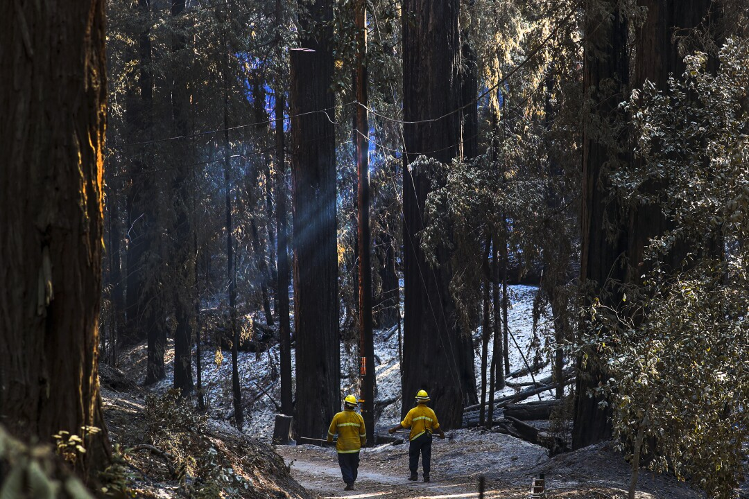 Santa Clara County firefighters Paul Lellman and Jared Lomeli investigate the fire damage to the CZU Lightning Complex.