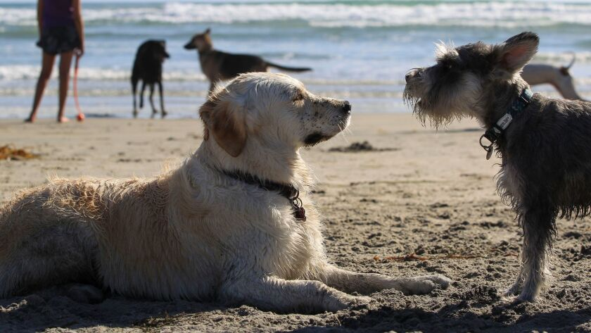 Lilly, left, looks at another dog at Dog Beach in Del Mar on Wednesday.