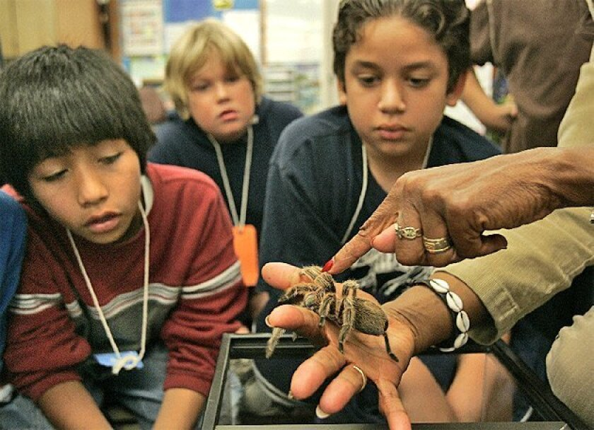 """Camara Sankofa held a tarantula as fifth-graders Ernesto Aguayo (left) and Robert McGowans (center) and Jason De Leon watched. It's a way to get students to """"step out of their comfort zone,"""" she said. (Nancee E. Lewis / Union-Tribune)"""