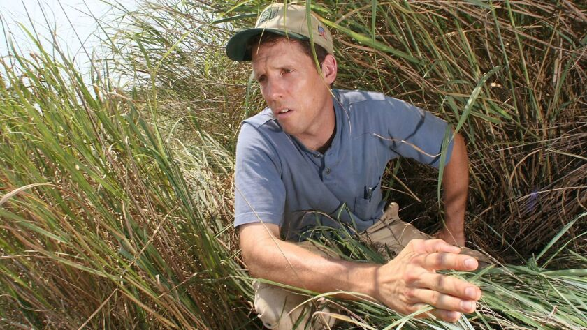 John Fike, a Virginia Tech researcher, combs through switchgrass at the school's agricultural center
