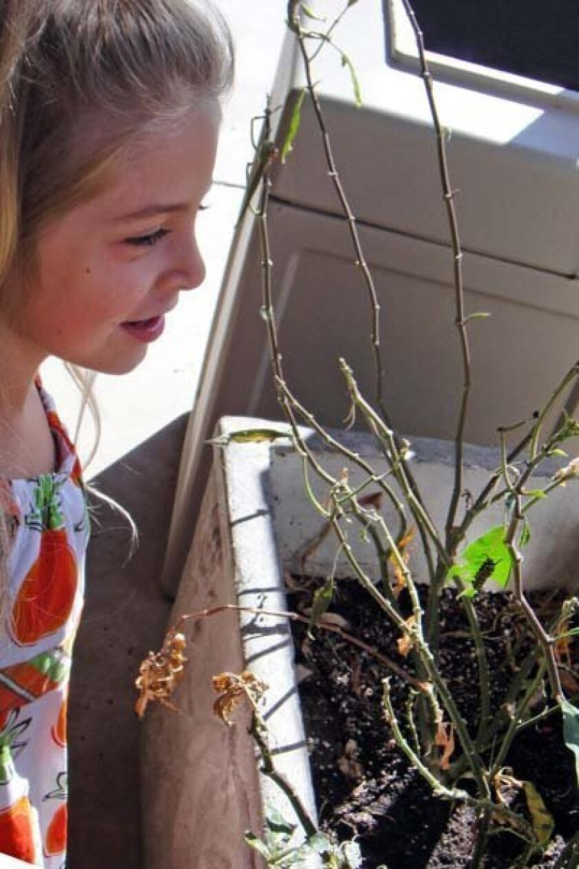 Tahlia Fisch checks in on the hungry caterpillars. Photo: Annette Bradbury