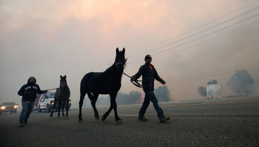 Jose Gutierrez evacuates horses in Simi Valley as the Easy fire burned the morning of Oct. 30.
