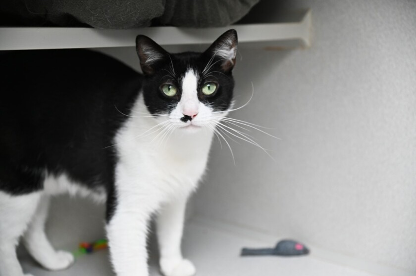 Daisy is Pet of the week