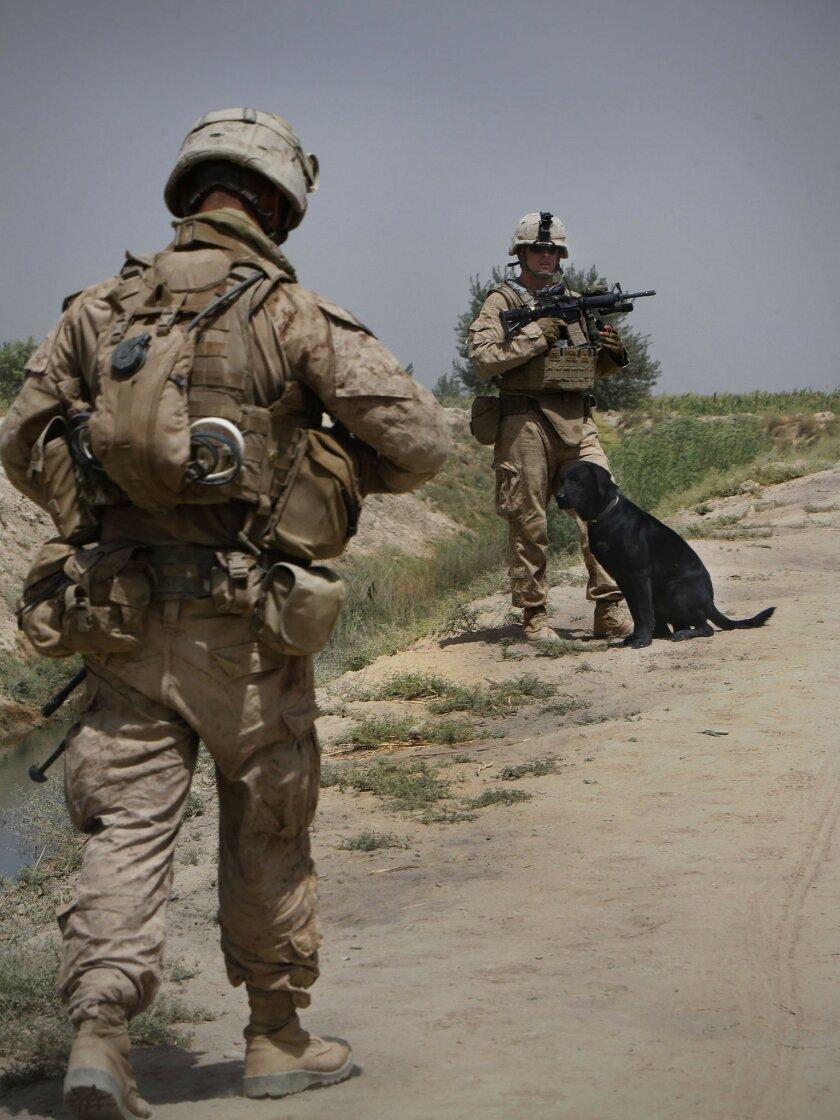 Marine Corps expands infantry bomb dog program - The San