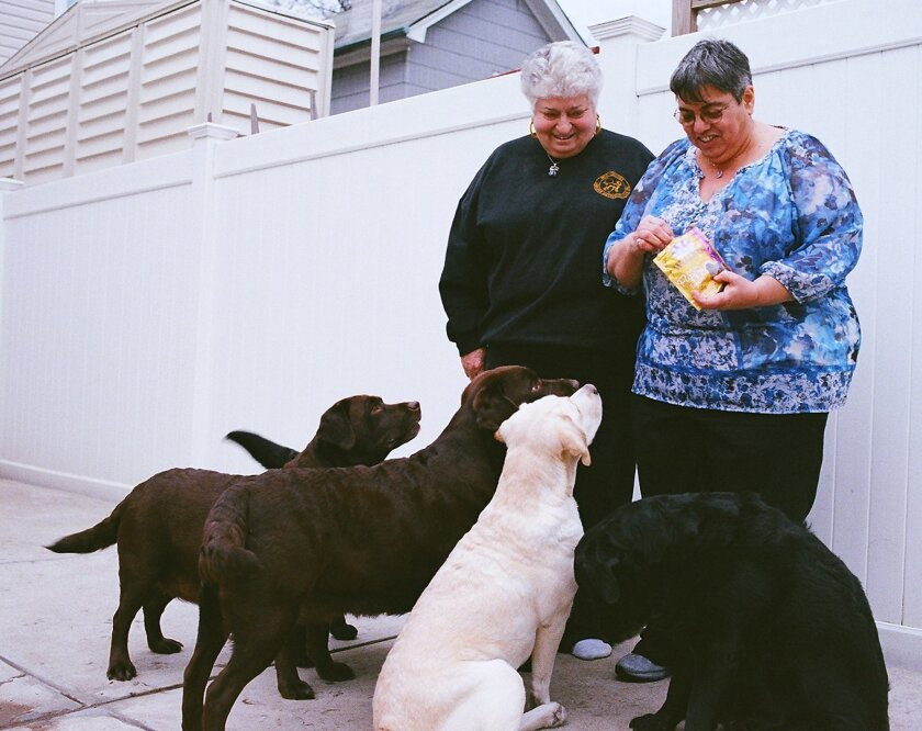 In this Feb. 4, 2016, photo, longtime Labrador retriever breeder Micki Beerman, left, and her wife, Linda Pensabene, give treats to some of the dogs they have bred, at their home in the Brooklyn borough of New York. The retired teachers are among a relatively small number of people who work to bree