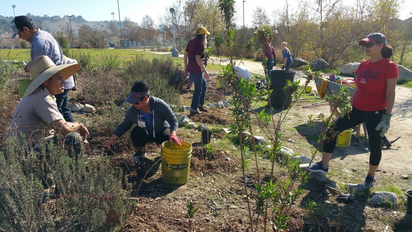 You can learn about habitat restoration by removing invasive plants at Rio de Los Angeles State Park