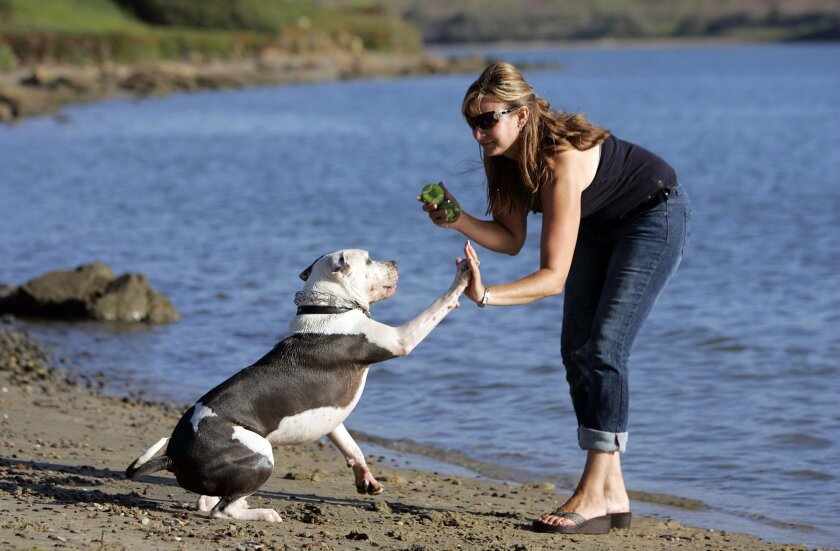 Gina Alvarez of Oceanside took her pit bull terrier Rascal to play at Agua Hedionda Lagoon in Carlsbad, among her favorite local coastal spots. (K.C. Alfred / Union-Tribune)