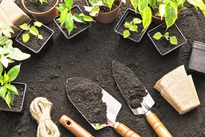 plants and garden tools