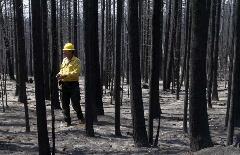 House OKs more logging in national forests, including in California