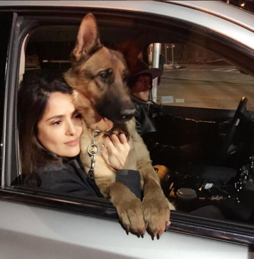 La actriz mexicana Salma Hayek no ha perdido oportunidad de tomarse fotos con cuanto animalito se encuentra, pero ahora sufre la pérdida de una de sus propias mascotas a causa de un disparo.