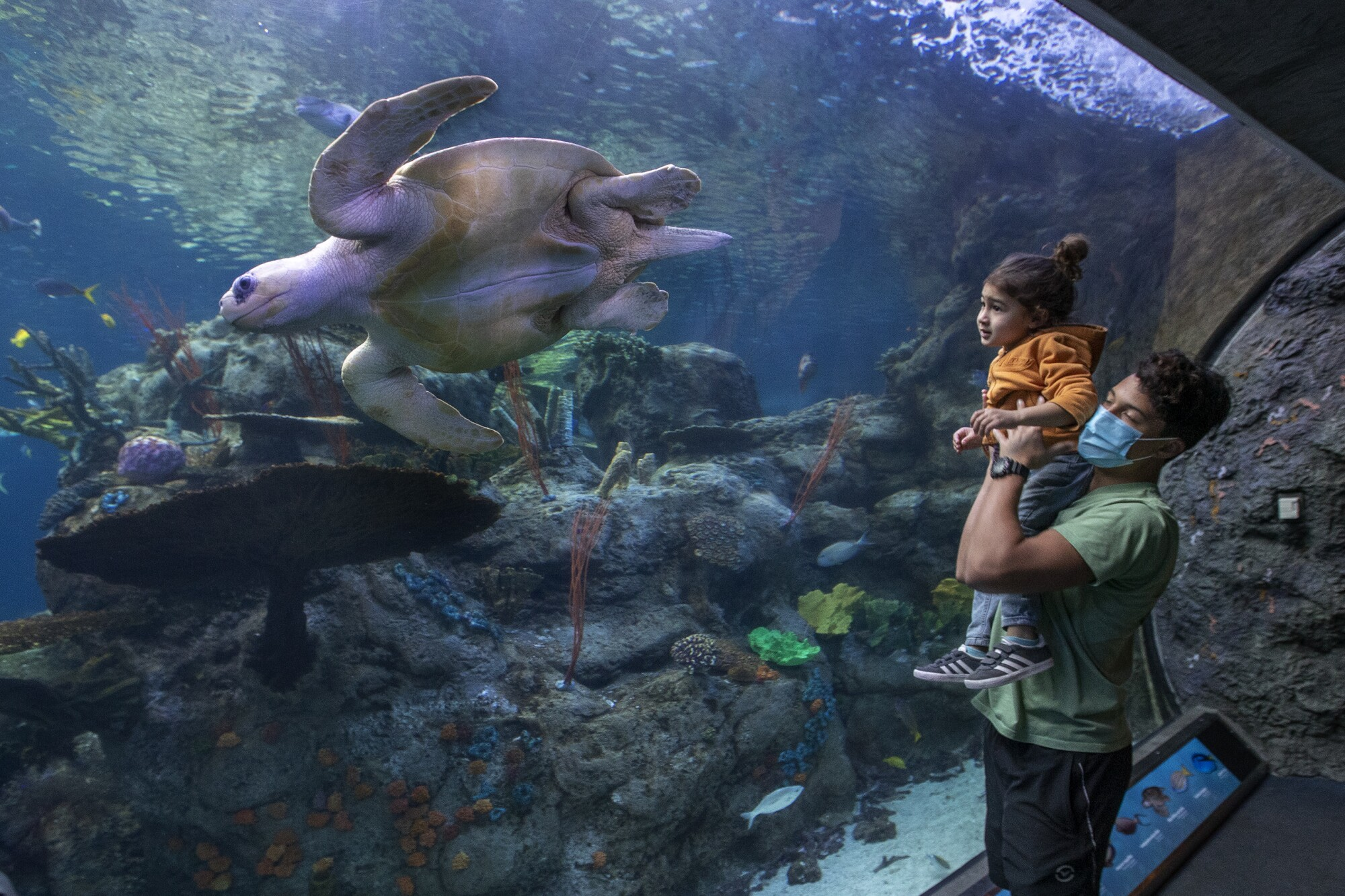 A teenage boy holds up a young child as they watch a turtle swim past them in an exhibit