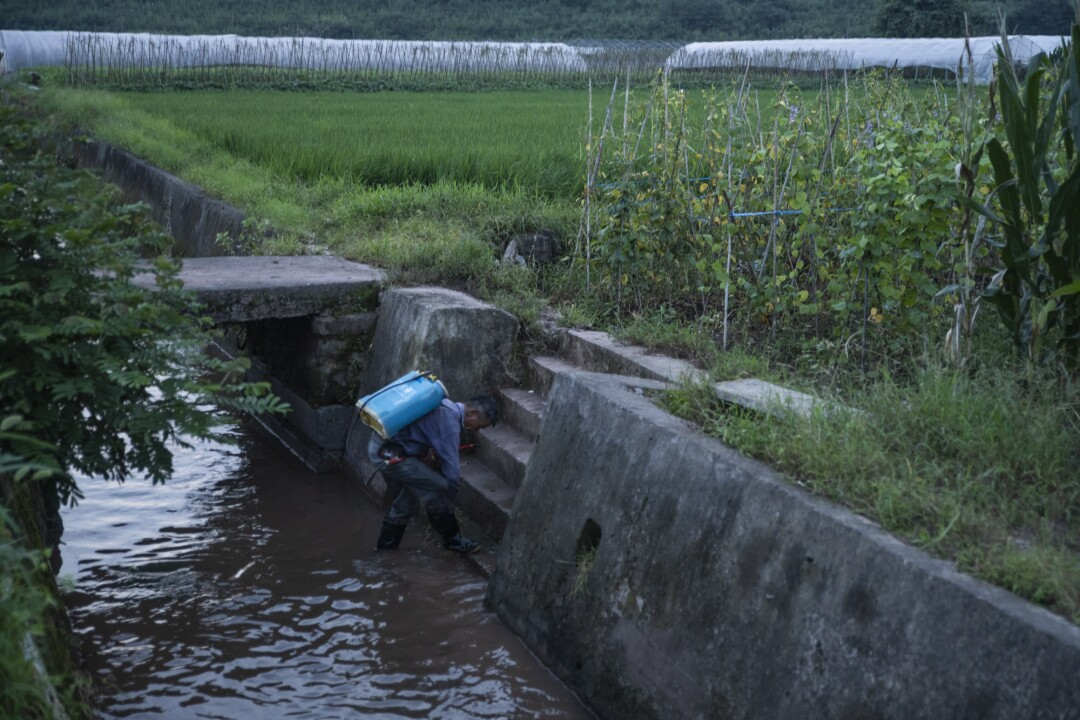 A farmer in Xixinan village steps into a stream encased in concrete.