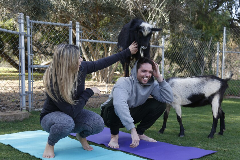 Blind Daters Ashley and Kyle enjoy yoga with goats at the Blissful Goat.