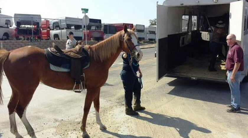 Horses enveloped by 'quicksand' rescued in Jurupa Valley
