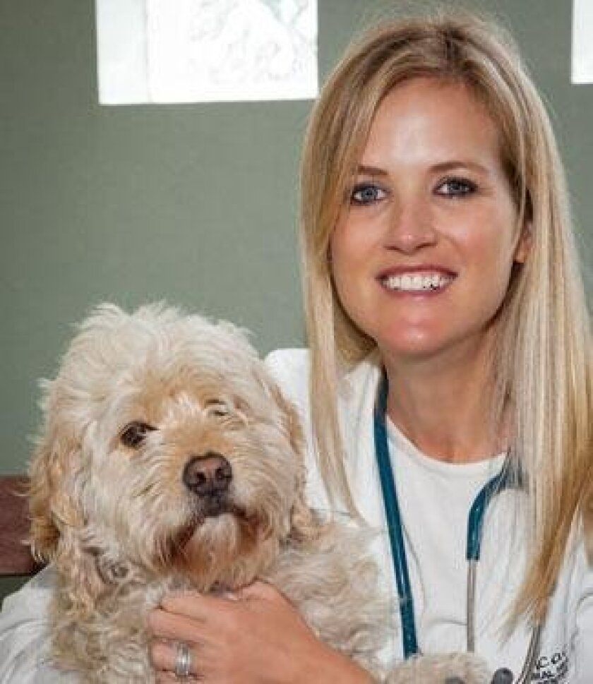 Carrie Bone, DVM, of La Jolla Veterinary Hospital with a patient