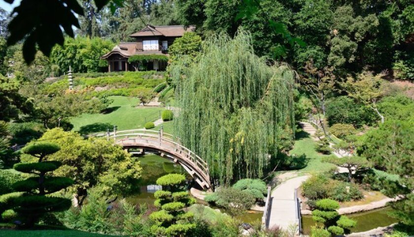 The Huntington's Japanese Garden features a classic Moon Bridge that curves gracefully above a lively koi pond, where winding paths lead to an authentic tea house built in Kyoto in the 1960s.