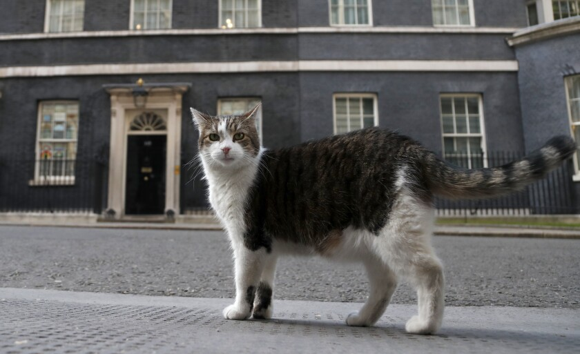 A cat walks outside 10 Downing Street