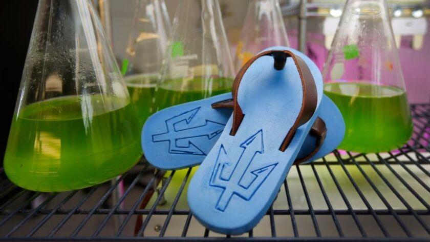 Image of algae-based plastic flip flops with vials of algae plastic solution
