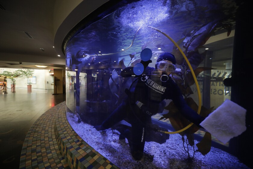 Marine biologist Daniel Gilboa cleans the aquarium inside Los Angeles' Union Station.
