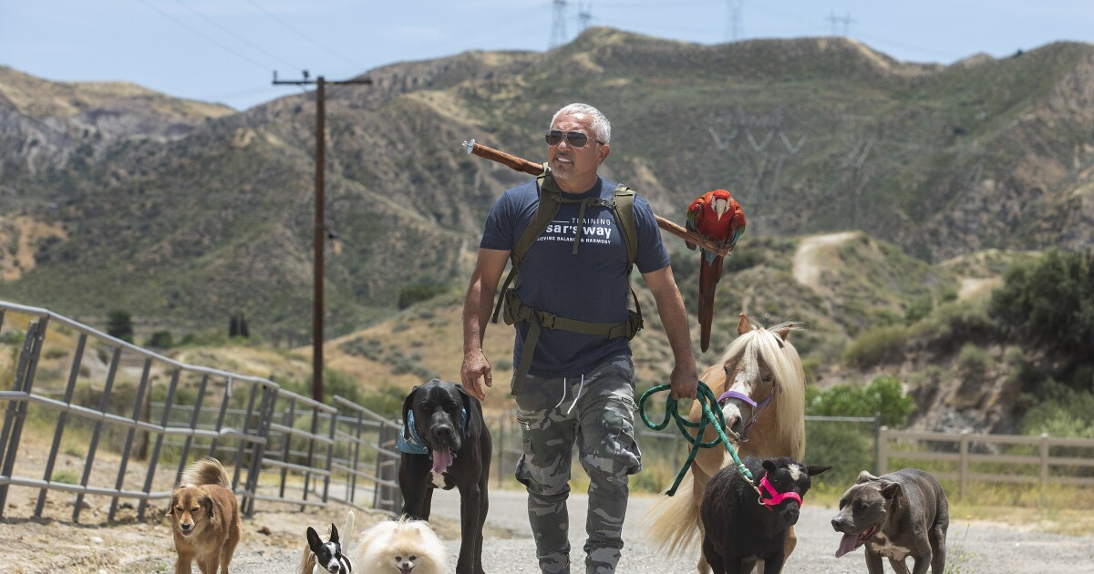 Lots of us adopted dogs in quarantine: 'Dog Whisperer' César Millán has some tips