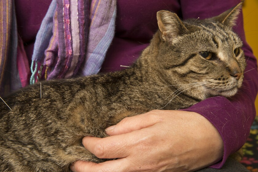 Why vets are adopting nontraditional approaches to healing your pet