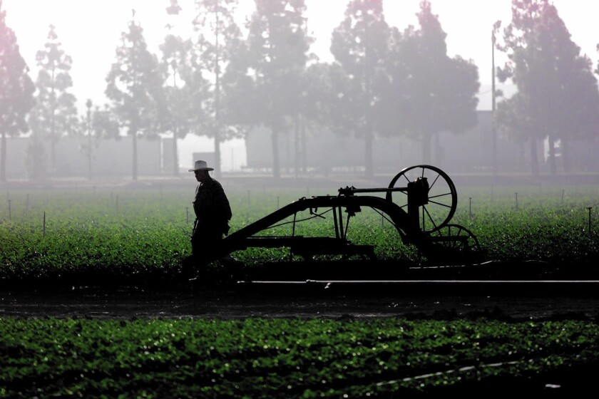 Fog silhouettes field worker Jose Gonzalez as he walks past an old plow in a field along Sunflower Avenue and Sakioka Drive in Costa Mesa. A new apartment complex has been approved on nearby land owned by the Sakioka family.