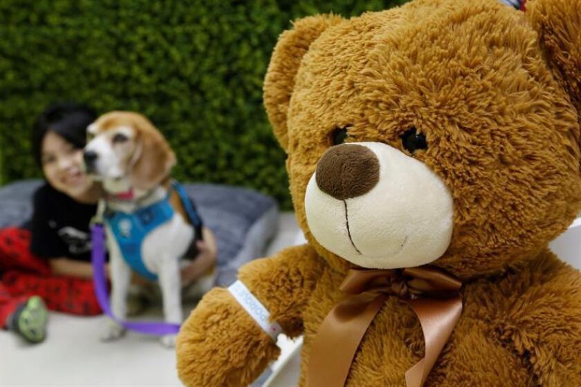 Con perros y juegos, hospital mexicano atiende a niños enfermos terminales