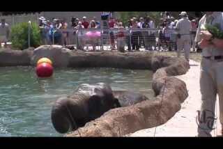 San Diego Zoo Elephant Pool Party