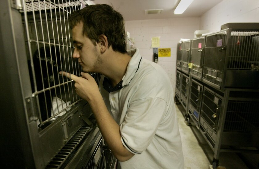 """Nathan Emmons plays with a small black cat at the El Cajon Animal Shelter last year. The shelter is one of many around the county and across the country taking part in """"Clear the Shelters,"""" an annual event putting companion animals into forever homes."""