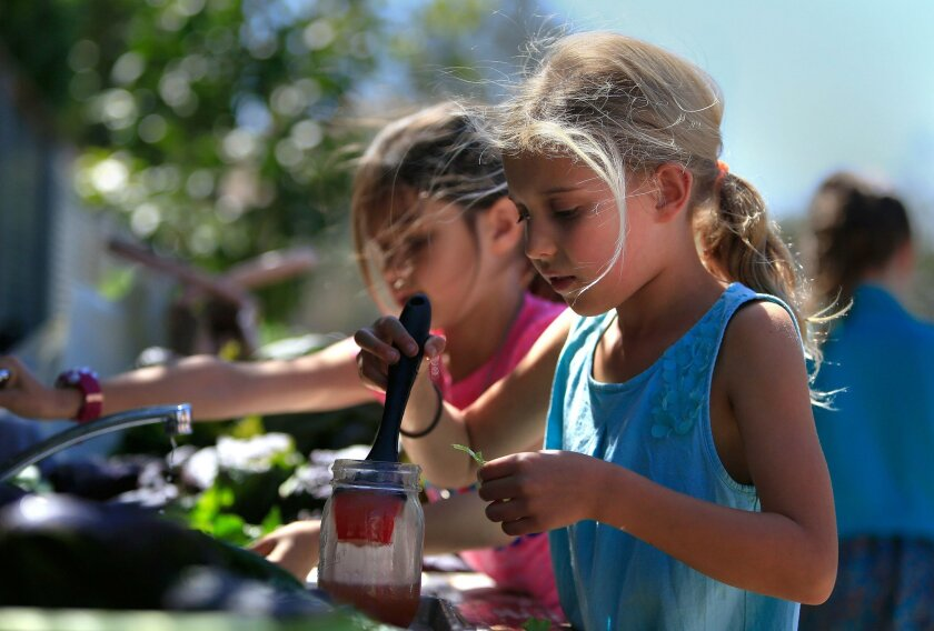 Del Mar Heights Elementary second-grader Emma Singleton applies dressing to a piece of lettuce  that she harvested from the school garden during the Garden Lunch Club.