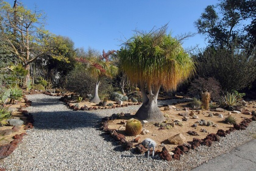 Dominguez Rancho Adobe's stunning cactus garden maintained by members of the Long Beach Cactus Club.