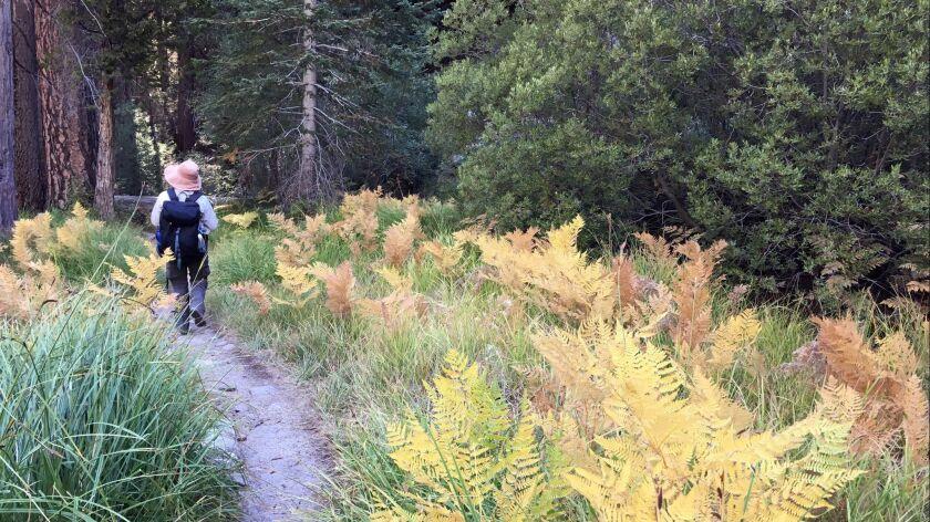 Sierra Club takes hikers to the 11,500-foot peak of San Gorgonio in the San Bernardino Mountains. Yo