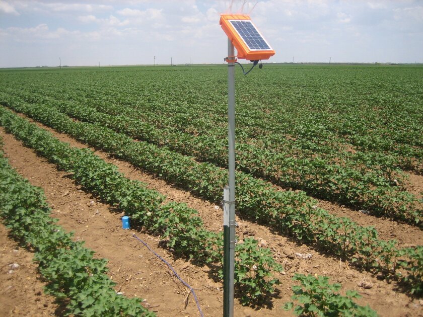 An AquaSpy communications tower in a cotton field relays data from an underground probe about soil moisture and temperature in real time.