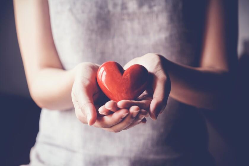Nadie ha encontrado todavía un método que conduzca a la regeneración cardiovascular de un corazón humano dañado.