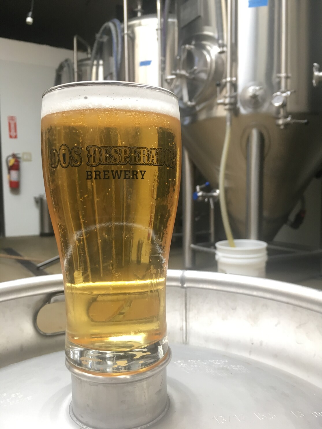 Beer Of The Week Lager Magnifico From Dos Desperados Brewery Pacific San Diego