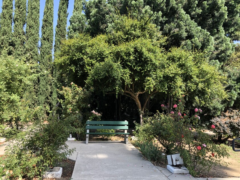 Silence-seekers who come to Lacy Park should head for the rose garden on the park's west side.