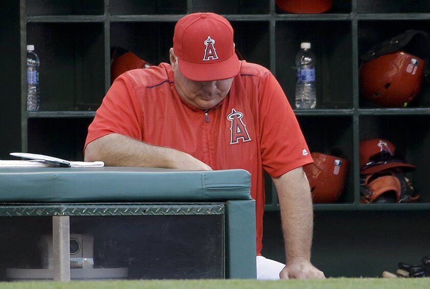 Los Angeles Angels manager Mike Scioscia stands in the dugout during the ninth inning of the team's baseball game against the Detroit Tigers in Anaheim, Calif., Wednesday, June 1, 2016. The Tigers won 3-0. (AP Photo/Chris Carlson)
