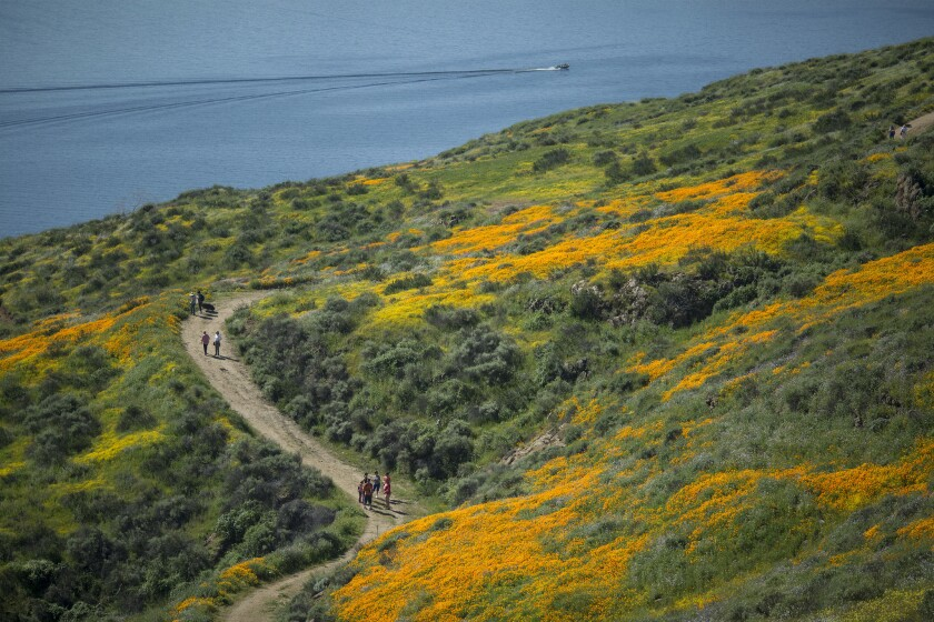 Hikers are surrounded by flowers at Diamond Valley Lake, near Hemet, Calif., on March 16, 2017.