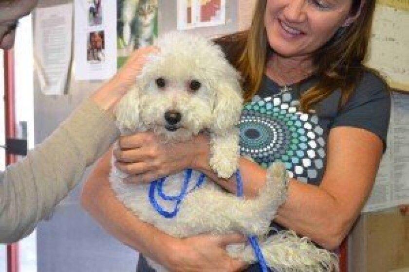 Dream with the Helen Woodward Animal Center's foster staff member Pam Fleischman.